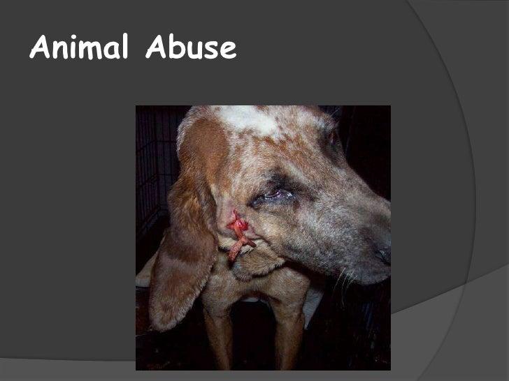 Animal Abuse<br />