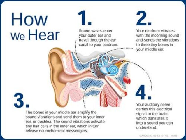 the process of hearing and the path of the vibrations 3m center for hearing as well as the sound path a noise control engineer can help you vibration where possible modify the process or method of.