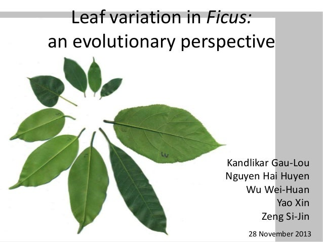 Leaf variation in Ficus: an evolutionary perspective  Kandlikar Gau-Lou Nguyen Hai Huyen Wu Wei-Huan Yao Xin Zeng Si-Jin 2...