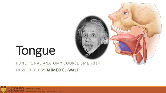 Tongue FUNCTIONAL ANATOMY COURSE BME 7014 DEVELOPED BY AHMED EL-WALI 1 Ahmed El-Wali Functional Anatomy Course BME 7014