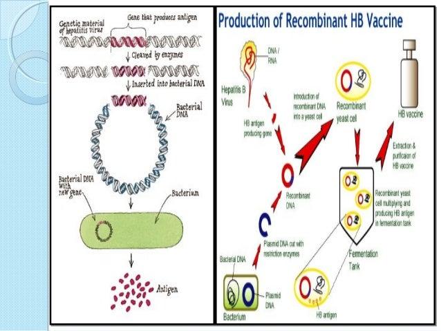 recombinant hepatitis b vaccine production pdf
