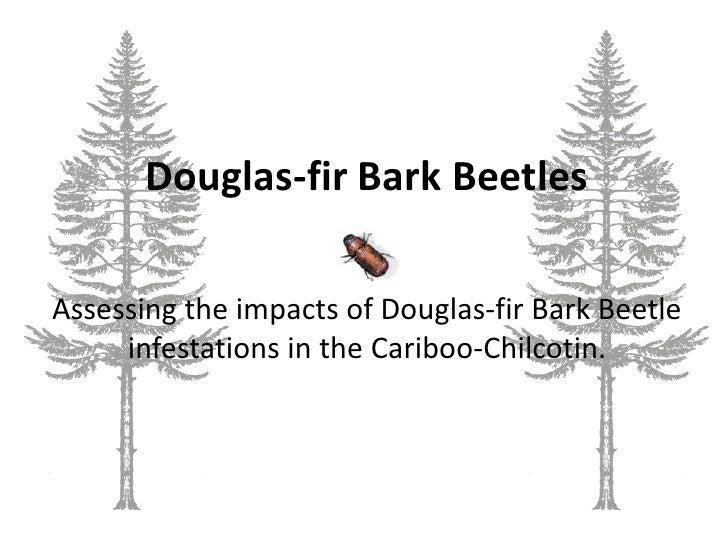 Douglas-fir Bark Beetles<br />Assessing the impacts of Douglas-fir Bark Beetle infestations in the Cariboo-Chilcotin.<br />
