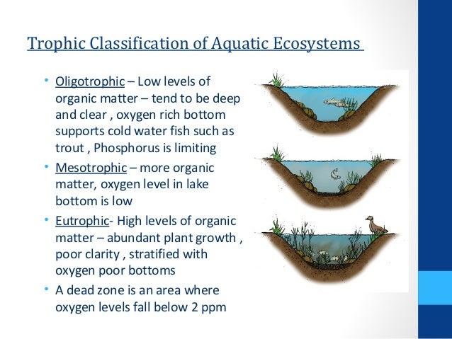 Nitrogen and Phosphoru... Water Cycle Runoff