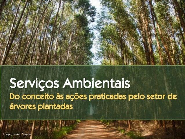 Serviços Ambientais Do conceito às ações praticadas pelo setor de árvores plantadas Imagem – Arq. Suzano