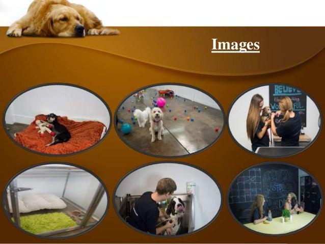 Dog Day Care In Edmond Ok