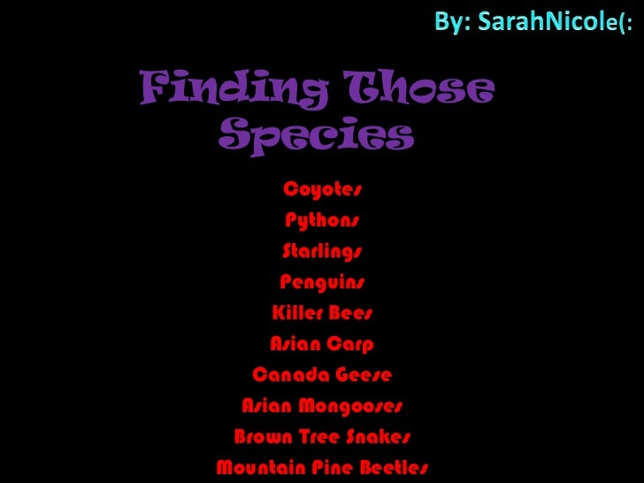 By: SarahNicole(:<br />Finding Those Species<br />Coyotes<br />Pythons<br />Starlings<br />Penguins<br />Killer Bees<br />...