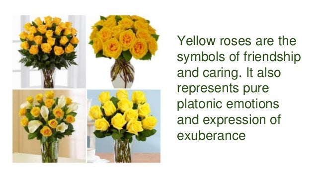 Find out different meanings of rose colors for What color is the friendship rose