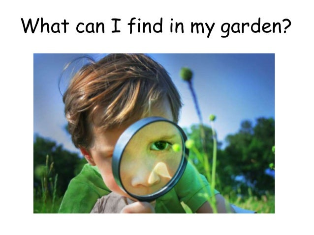 what can i find in my garden