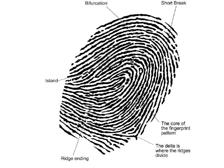 fingerprint identification Fingerprinting wrested the personal identification methodology title from the bertillion method and has been the undisputed, and unchallenged, world champion of personal identification ever since over the years, the employment of the use of fingerprinting has become synonymous with criminal identification.