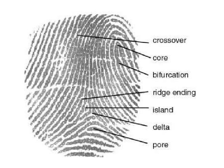CSI'/ Forensics Fingerprint Identification