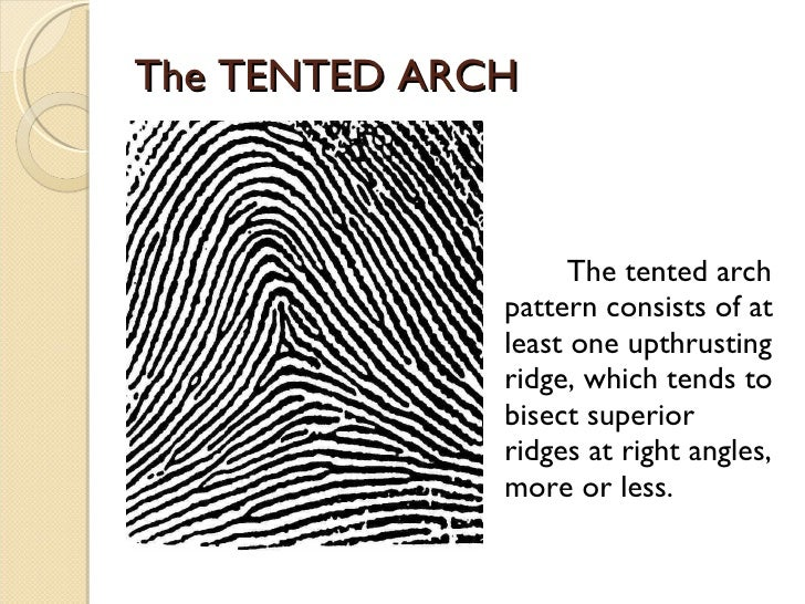 ... 8. The TENTED ARCH ...  sc 1 st  SlideShare & Fingerprint Pattern