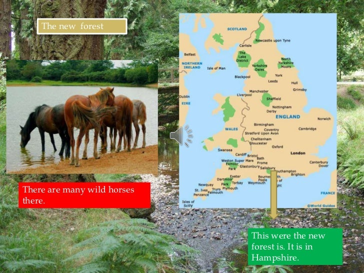 The new forestThere are many wild horsesthere.                             This were the new                             f...