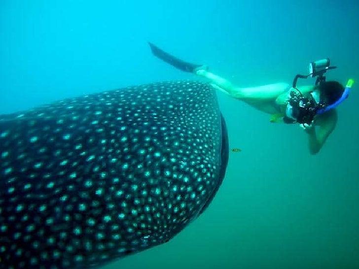 Tubarões po Fiona ayerst