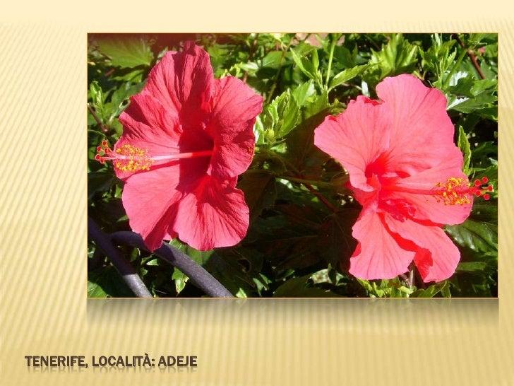 Fiori E Piante.Fiori E Piante Di Tenerife