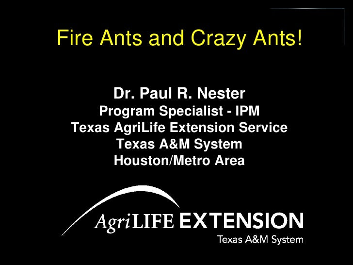 Fire Ants and Crazy Ants!         Dr. Paul R. Nester      Program Specialist - IPM  Texas AgriLife Extension Service      ...
