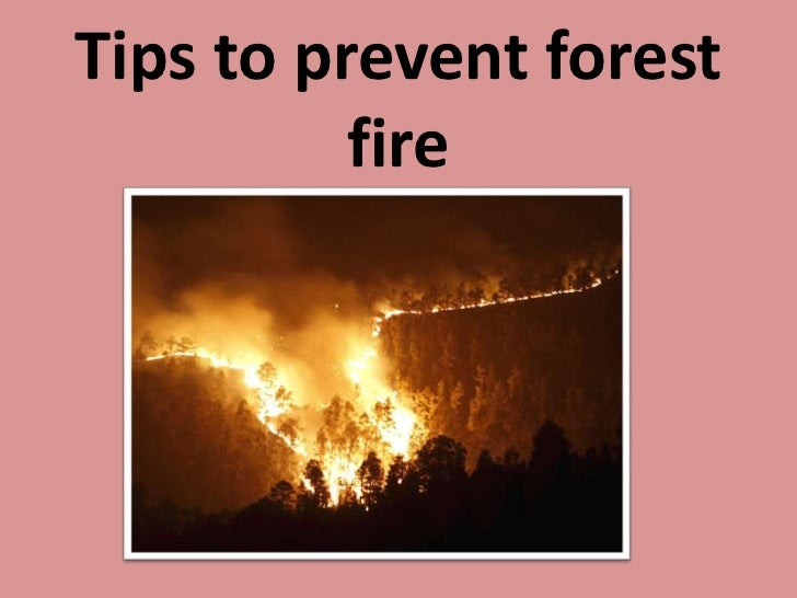 Tips to prevent forest          fire