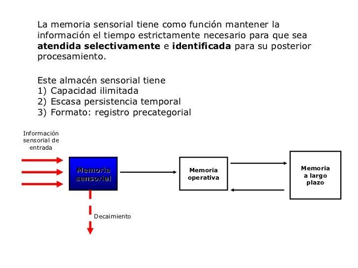 La memoria sensorial tiene como función mantener la información el tiempo estrictamente necesario para que sea atendida se...