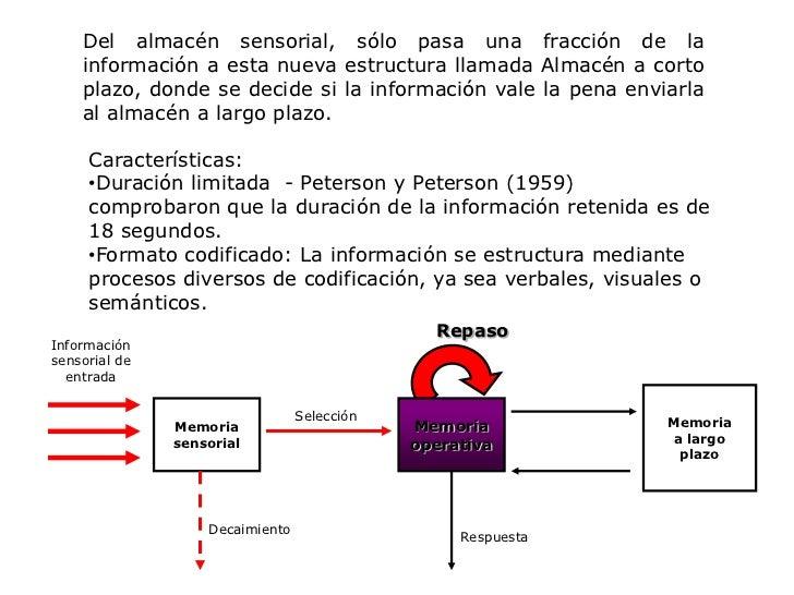Respuesta<br />Del almacén sensorial, sólo pasa una fracción de la información a esta nueva estructura llamada Almacén a c...