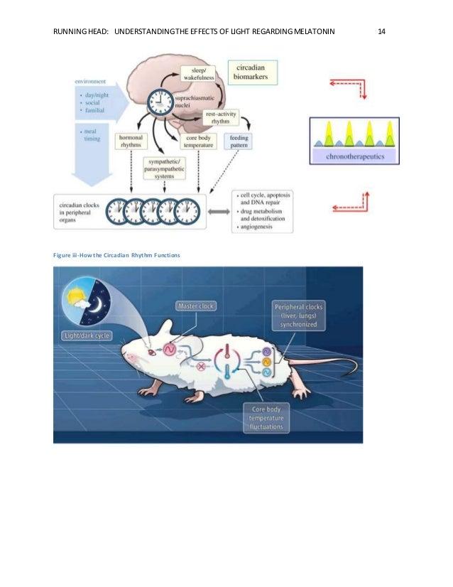 RUNNING HEAD: UNDERSTANDING THE EFFECTS OF LIGHT REGARDING MELATONIN 14  Figure iii-How the Circadian Rhythm Functions