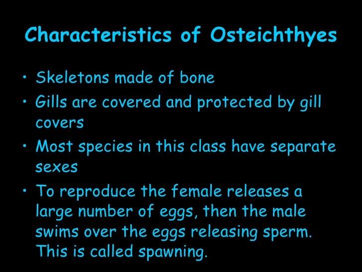 Fish for Characteristics of fish