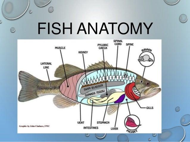 Fish Taxonomy & Charateristics