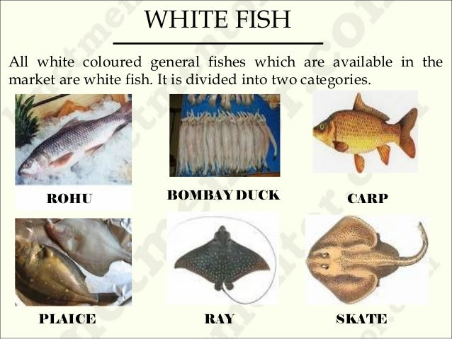 Fish for Fatty fish list