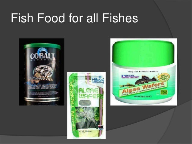 Fish aquariums at petz now online pet store for Online fish stores