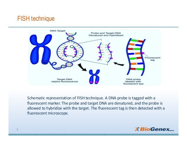 Fluorescent In Situ Hybridization Uses