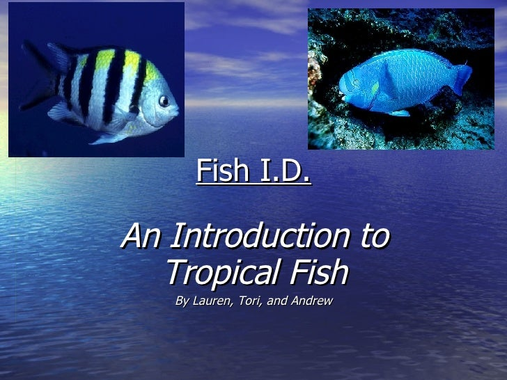 Fish I.D. An Introduction to Tropical Fish By Lauren, Tori, and Andrew