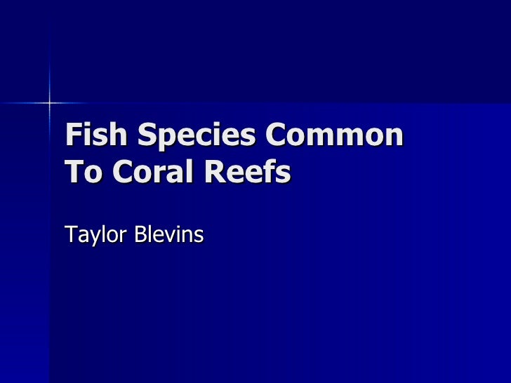 Fish Species Common To Coral Reefs Taylor Blevins