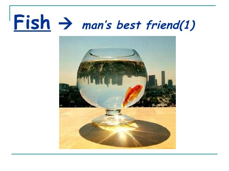 Fish      man's best friend(1)