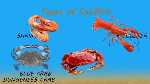 3494c542949e6a Types of Shellfish SHRIMPS LOBSTER BLUE CRAB DUNGENESS CRAB; 16.