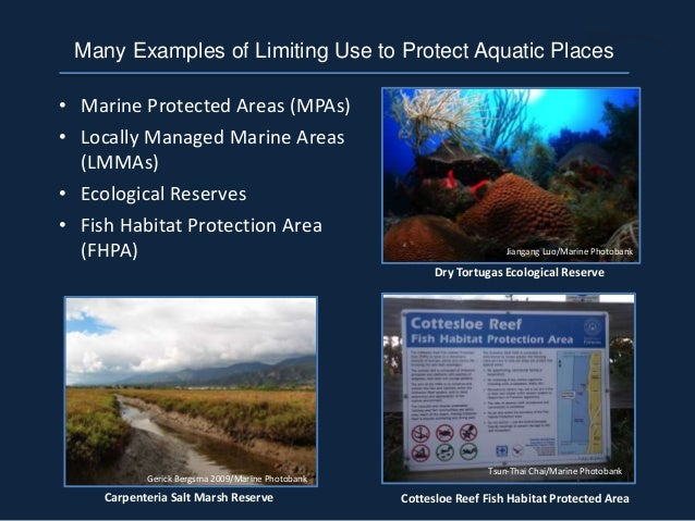 • Marine Protected Areas (MPAs) • Locally Managed Marine Areas (LMMAs) • Ecological Reserves • Fish Habitat Protection Are...