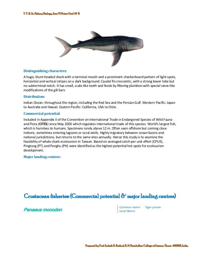 Marine commercial fin fish and shell finsh fisheries of india 13 publicscrutiny Gallery