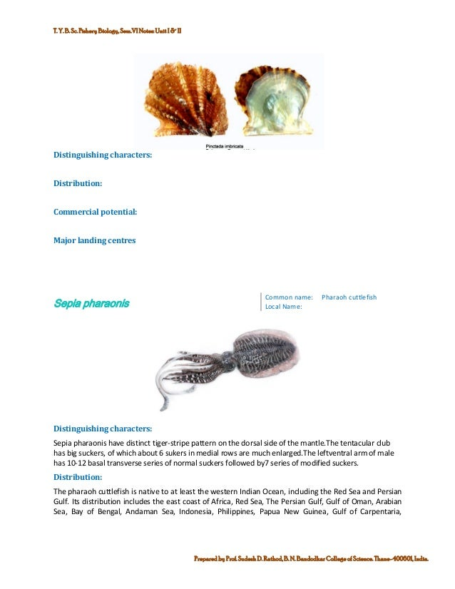 Marine commercial fin fish and shell finsh fisheries of india 19 publicscrutiny Gallery