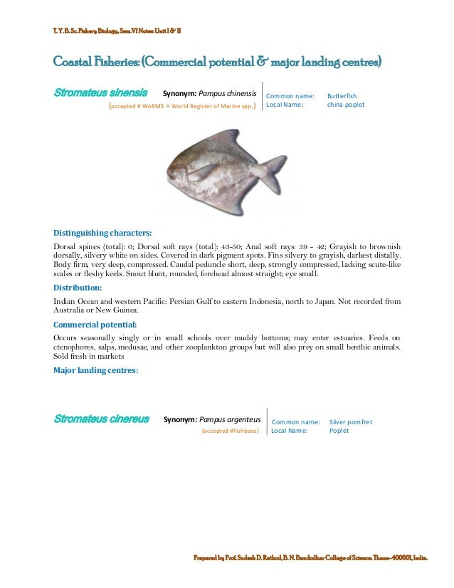 Marine commercial fin fish and shell finsh fisheries of india 2 publicscrutiny Gallery