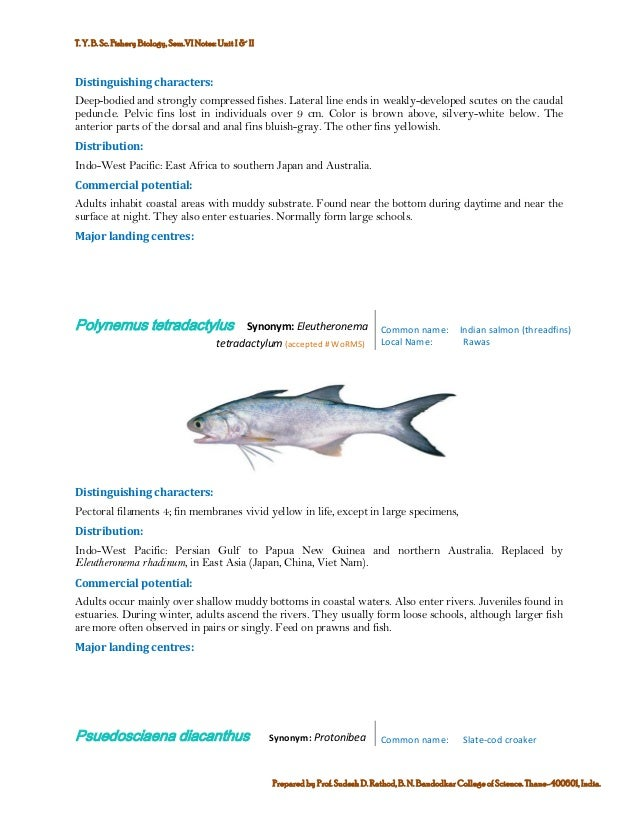 Marine commercial fin fish and shell finsh fisheries of india 4 publicscrutiny Gallery