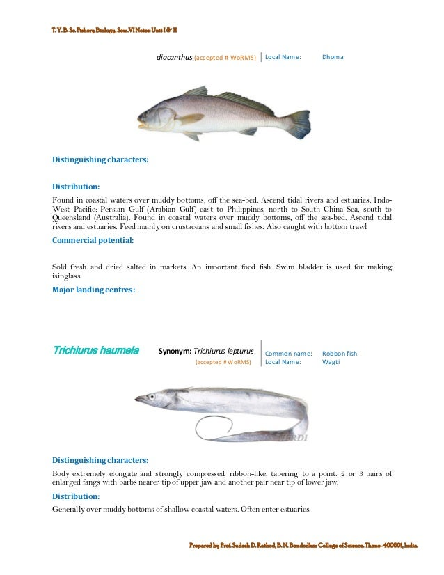Marine commercial fin fish and shell finsh fisheries of india 5 publicscrutiny Gallery