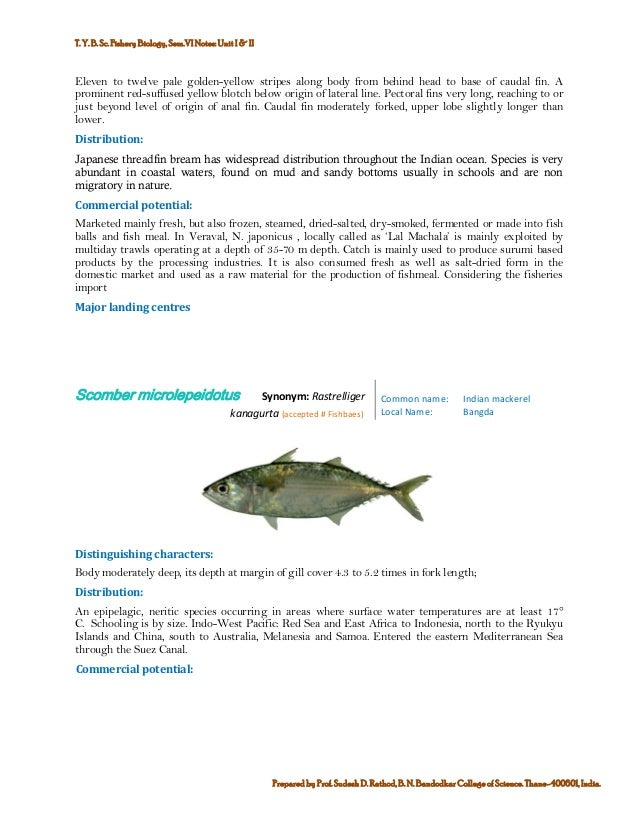 Marine commercial fin fish and shell finsh fisheries of india 7 publicscrutiny Gallery