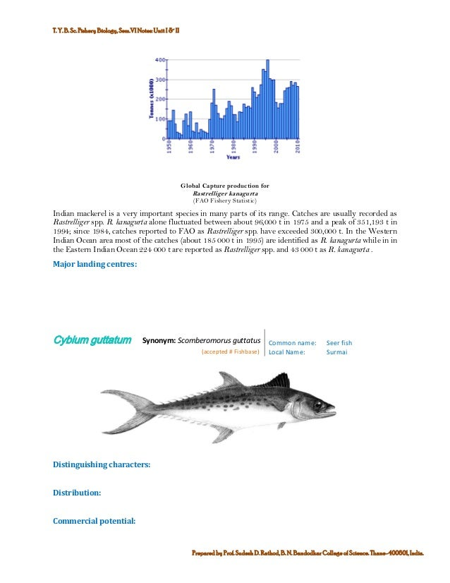 Marine commercial fin fish and shell finsh fisheries of india commercial potential 8 publicscrutiny Gallery