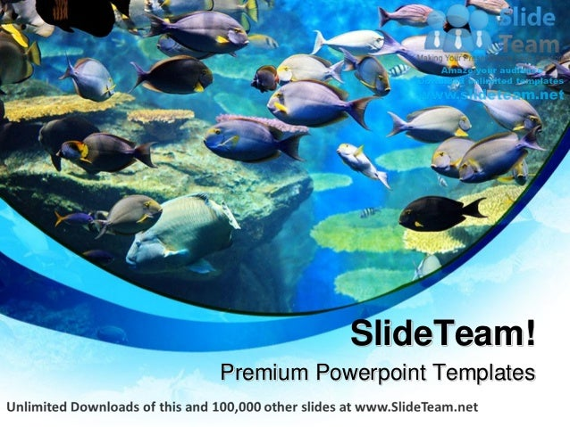 Fishes inside sea animals power point templates themes and background premium powerpoint templates toneelgroepblik Images