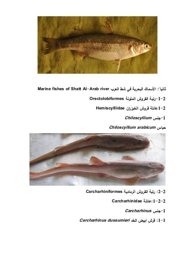 Fishes Of Shatt Al Arab