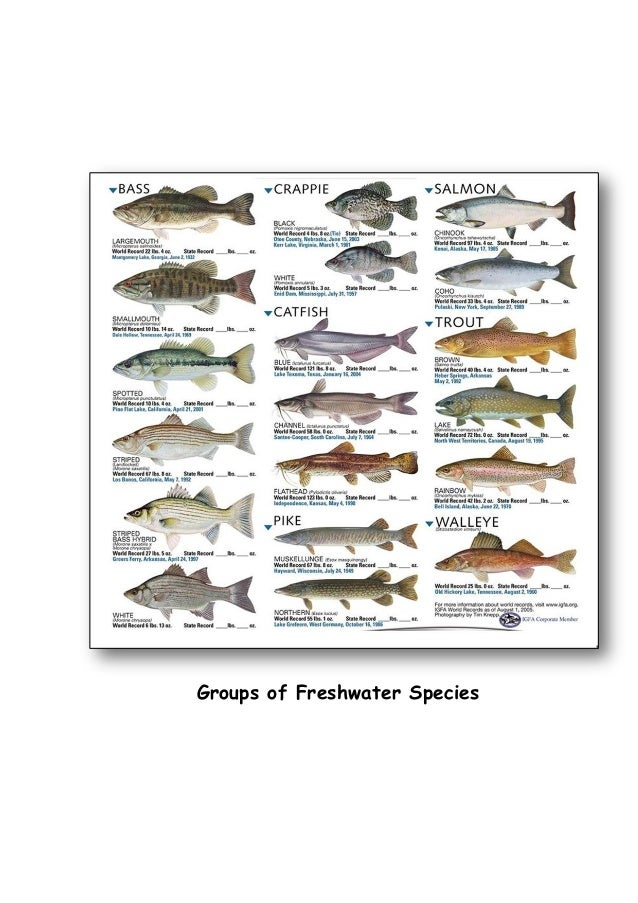 Fish seed production cultivable fish species with fish for Names of fish to eat
