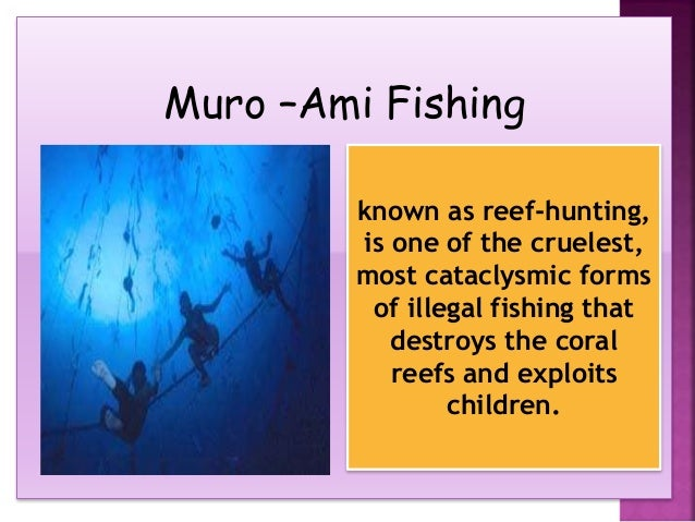 cause of muro ami fishing