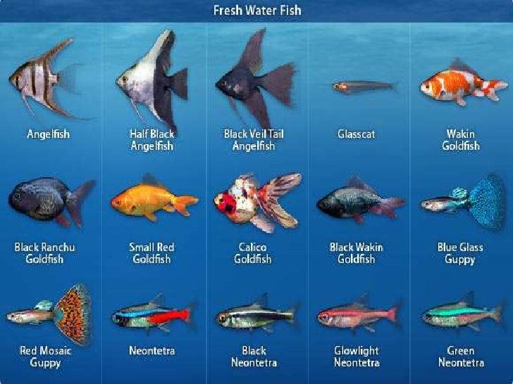 Common Aquarium Fishes In Kerala Aquarium Fish Photography Photos