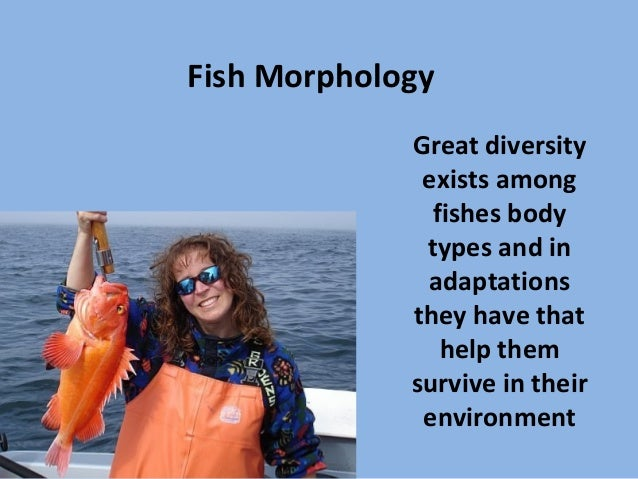 Fish MorphologyGreat diversityexists amongfishes bodytypes and inadaptationsthey have thathelp themsurvive in theirenviron...