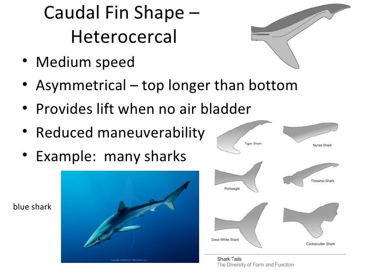 how do shark reduce drag essay No one really knows what removing such a high level predator from the marine food chain will do ^ to top shark in shark nets although efforts to reduce.