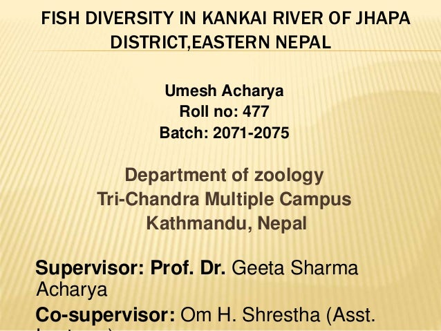 FISH DIVERSITY IN KANKAI RIVER OF JHAPA DISTRICT,EASTERN NEPAL Umesh Acharya Roll no: 477 Batch: 2071-2075 Department of z...