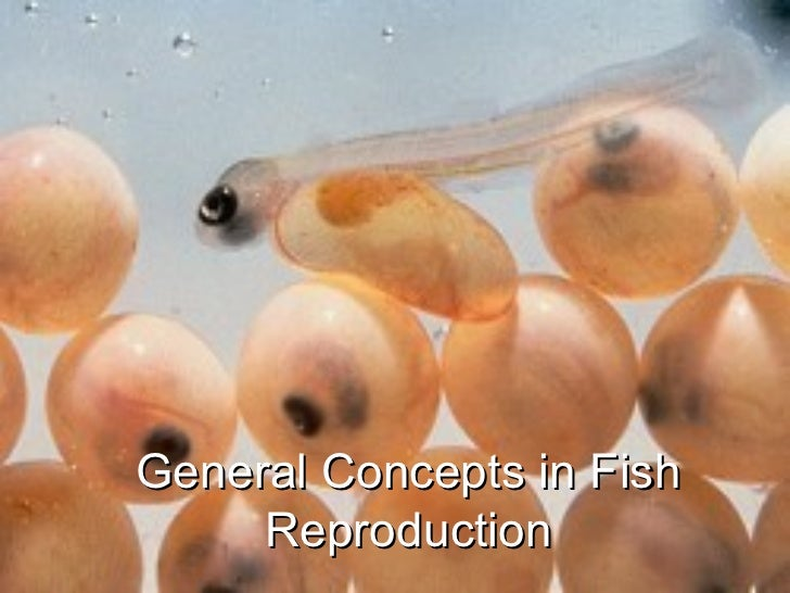 General Concepts in Fish Reproduction