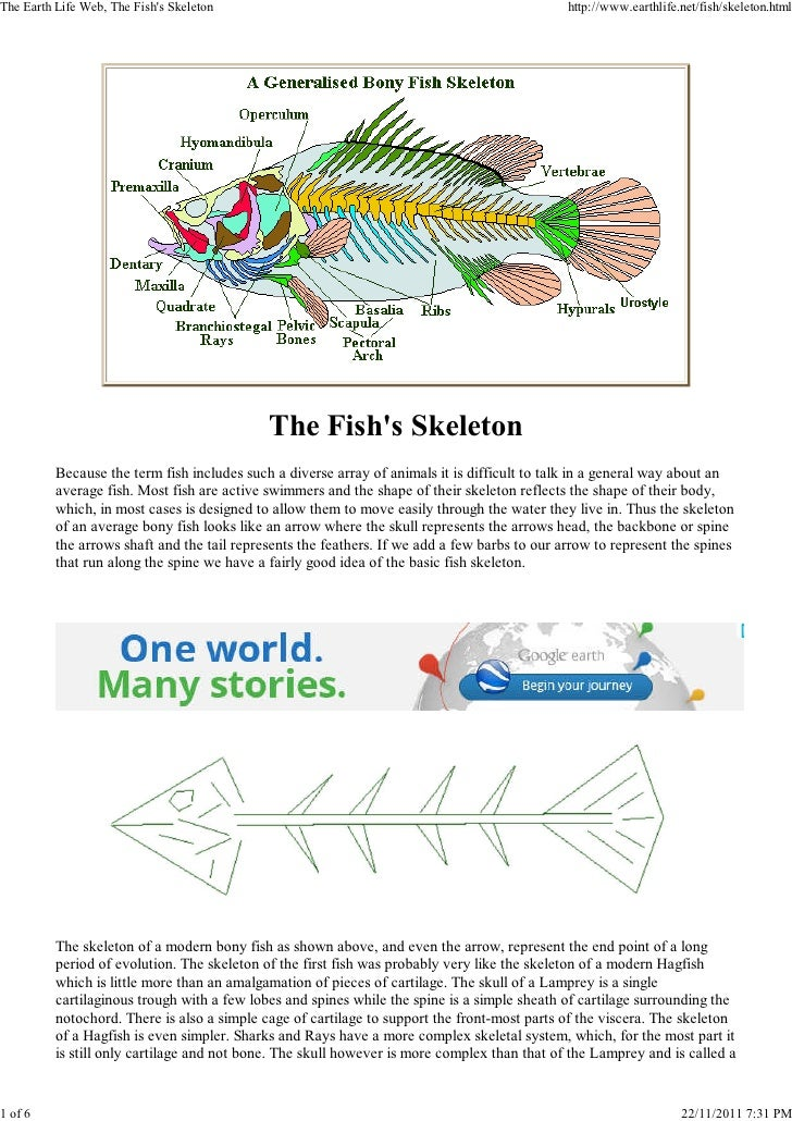 The Earth Life Web, The Fishs Skeleton                                                        http://www.earthlife.net/fis...